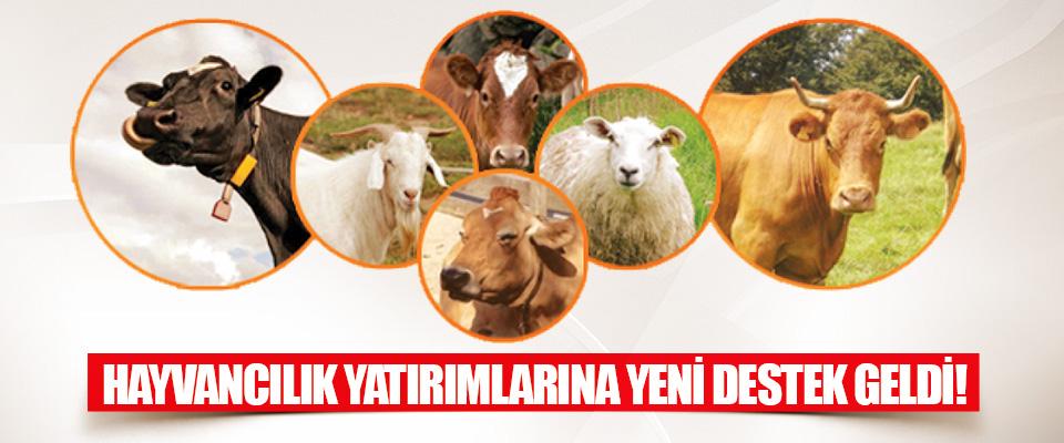 Hayvancılık Yatırımlarına Yeni Destek Geldi!