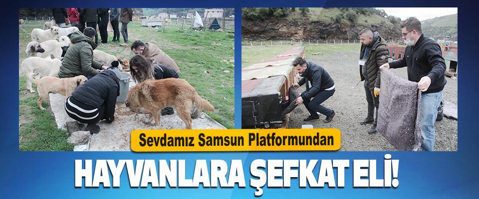 Sevdamız Samsun Platformundan Hayvanlara Şefkat Eli!