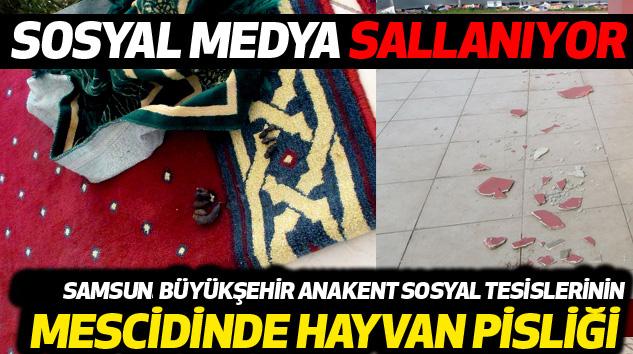 Samsunsun Büyükşehir Anakent Sosyal Tesislerinin Mescidinde Hayvan Pisliği