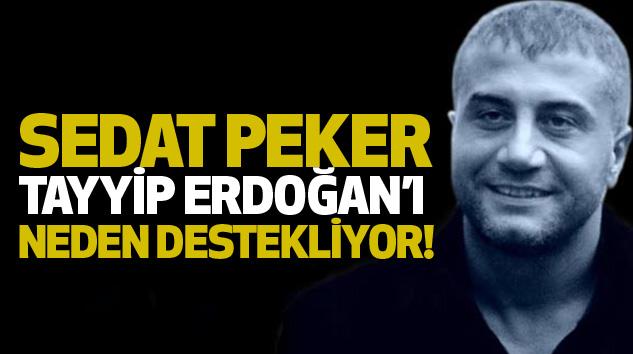Sedat Peker Tayyip Erdoğan'ı Neden Destekliyor!