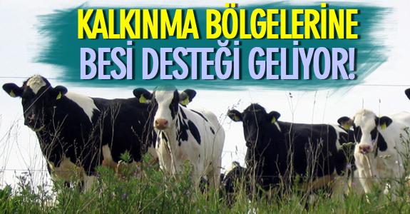 KALKINMA BÖLGELERİNE BESİ DESTEĞİ GELİYOR!