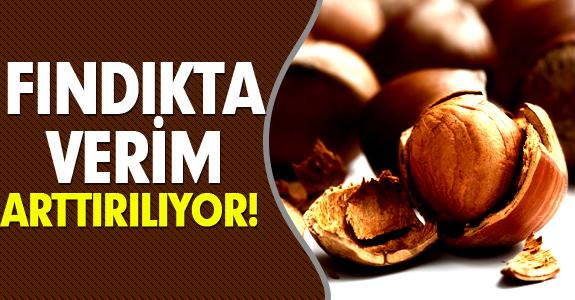 FINDIKTA VERİM ARTTIRILIYOR!