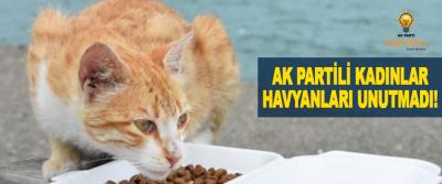 AK Partili kadınlar hayvanları unutmadı!