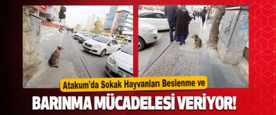Atakum'da Sokak Hayvanları Beslenme ve Barınma Mücadelesi Veriyor!