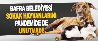 Bafra Belediyesi Sokak Hayvanlarını Pandemide de Unutmadı!