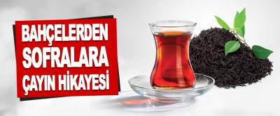 Bahçelerden Sofralara Çayın Hikayesi