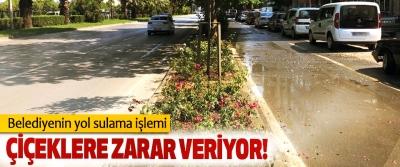 Belediyenin yol sulama işlemi Çiçeklere zarar veriyor!