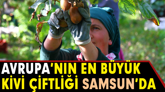 Avrupa'nın En Büyük Kivi Çiftliği Samsun'da