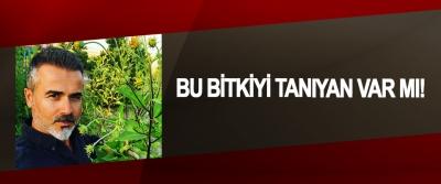 Bu Bitkiyi Tanıyan Var Mı!