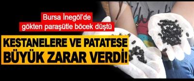 Bursa İnegöl'de gökten paraşütle böcek düştü