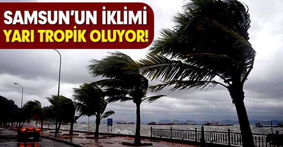 SAMSUN'UN İKLİMİ YARI TROPİK OLUYOR!