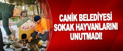 Canik Belediyesi Sokak Hayvanlarını Unutmadı!
