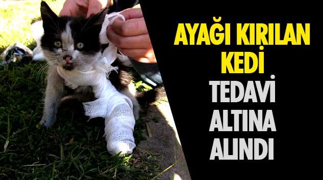 Ayağı Kırılan Olan Kedi Tedavi Altına Alındı