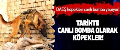 DAEŞ köpekleri canlı bomba yapıyor!
