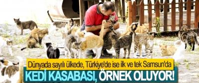 Dünyada sayılı ülkede, Türkiye'de ise ilk ve tek Samsun'da, Kedi kasabası, örnek oluyor!