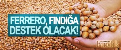 Ferrero, fındığa destek olacak!