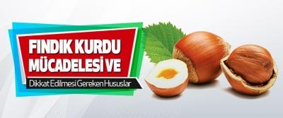 Fındık Kurdu Mücadelesi ve Dikkat Edilmesi Gereken Hususlar
