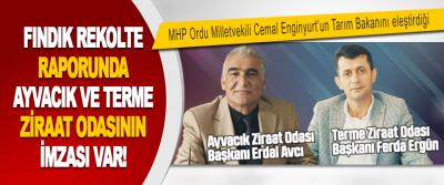 Fındık Rekolte Raporunda Ayvacık ve Terme Ziraat Odasının İmzası Var!