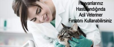 Hayvanlarınız Hastalandığında Acil Veteriner Fırsatını Kullanabilirsiniz