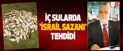 İç Sularda 'İsrail Sazanı' Tehdidi