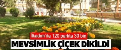 İlkadım'da 120 parkta 30 bin Mevsimlik Çiçek Dikildi