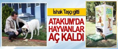 İshak Taşçı gitti, Atakum'da Hayvanlar Aç Kaldı