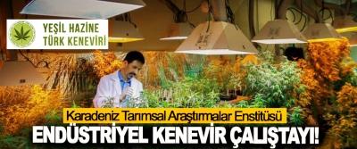 Karadeniz Tarımsal Araştırmalar Enstitüsü Endüstriyel kenevir çalıştayı!