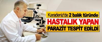 Karadeniz'de 2 balık türünde Hastalık Yapan Parazit Tespit Edildi
