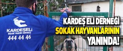 Kardeş Eli Derneği Sokak Hayvanlarının Yanında!
