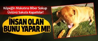 Köpeğin Makatına Biber Sokup Üstünü Sakızla Kapattılar!