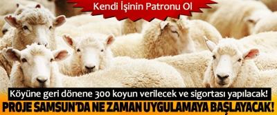 Köyüne geri dönene 300 koyun verilecek ve sigortası yapılacak!