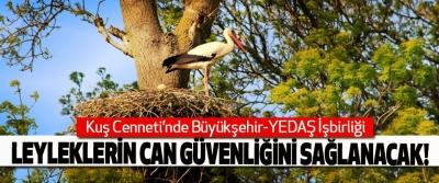 Kuş Cenneti'nde Büyükşehir-YEDAŞ İşbirliği, Leyleklerin can güvenliğini sağlanacak!