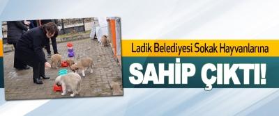Ladik Belediyesi Sokak Hayvanlarına Sahip Çıktı!