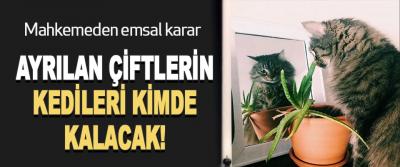 Mahkemeden emsal karar  Ayrılan çiftlerin kedileri kimde kalacak!