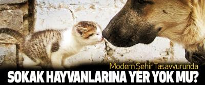 Modern Şehir Tasavvurunda Sokak Hayvanlarına Yer Yok Mu?