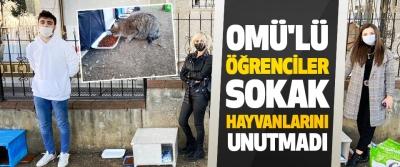 Omü'lü Öğrenciler Sokak Hayvanlarını Unutmadı