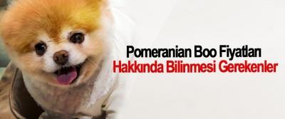 Pomeranian Boo Fiyatları Hakkında Bilinmesi Gerekenler