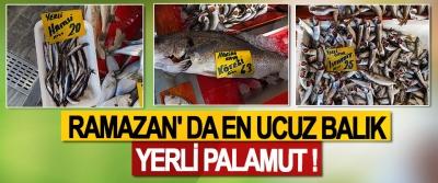 Ramazan' da en ucuz balık yerli palamut !