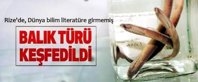 Rize'de, Dünya bilim literatüre girmemiş Balık Türü Keşfedildi