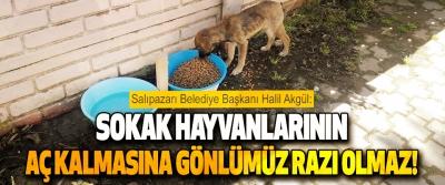 Salıpazarı Belediye Başkanı Halil Akgül Sokak Hayvanlarının Aç Kalmasına Gönlümüz Razı Olmaz!