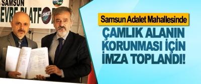 Samsun Adalet Mahallesinde Çamlık Alanın Korunması İçin İmza Toplandı!