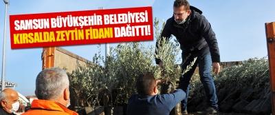 Samsun Büyükşehir Belediyesi Kırsalda Zeytin Fidanı Dağıttı!