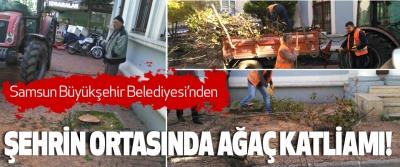Samsun Büyükşehir Belediyesi'nden Şehrin ortasında ağaç katliamı!