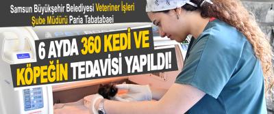 Samsun Büyükşehir Belediyesi Veteriner İşleri Şube Müdürü Paria Tabatabaei 6 Ayda 360 Kedi ve Köpeğin Tedavisi Yapıldı!