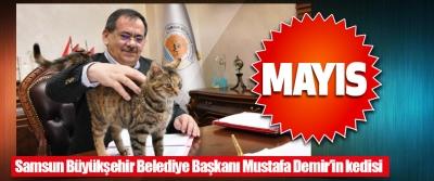 Samsun Büyükşehir Belediye Başkanı Mustafa Demir'in Kedisi