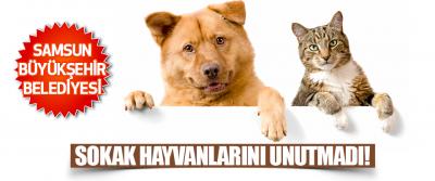 Samsun Büyükşehir Belediyesi Sokak Hayvanlarını Unutmadı