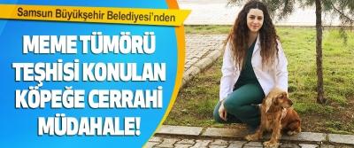 Samsun Büyükşehir Belediyesi'nden Meme Tümörü Teşhisi Konulan Köpeğe Cerrahi Müdahale!