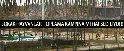 Samsun Büyükşehir Sokak Hayvanlarını toplama kampına mı hapsediyor!