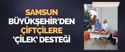 Samsun Büyükşehir'den Çiftçilere 'Çilek' Desteği