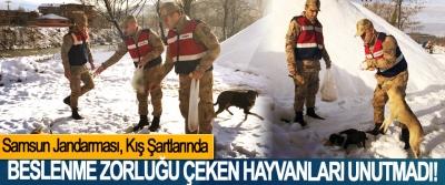 Samsun Jandarması Kış Şartlarında Beslenme Zorluğu Çeken Hayvanları Unutmadı!